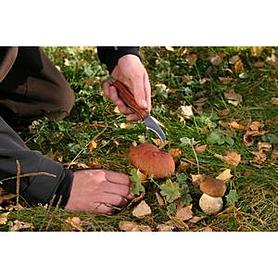 Фото 1 к товару Нож складной Экспедиция грибной