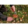 Нож складной Экспедиция грибной - фото 1
