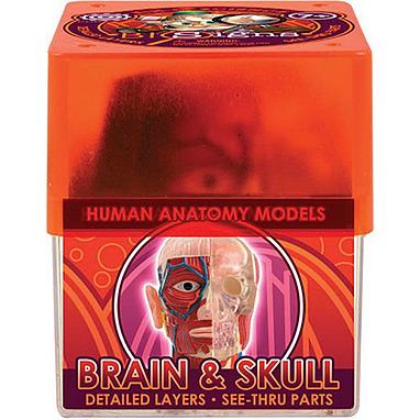 Набор Brain & skull Мозг и череп