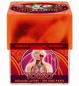 Набор Torso Торс