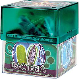 Набор Bacteria Бактерия