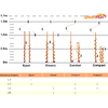 Ледобур ручной Heinola Speed Run Classic 155 мм - фото 3