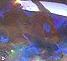 Воблер Imakatsu Crank IK-180 - 97 Flash Hasu