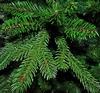 Ель TriumphTree Sherwood de Luxe 2,30 м зеленая - фото 3