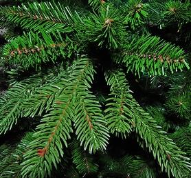 Фото 3 к товару Ель TriumphTree Sherwood de Luxe 2,30 м зеленая
