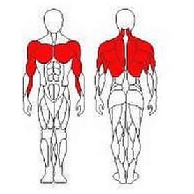 Фото 2 к товару Блок для мышц спины (верхняя тяга) Wuotan GB-03