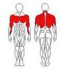 Блок для мышц спины (верхняя тяга) Wuotan GB-03 - фото 2