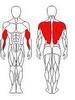 Тяга для трапецивидных мышц Wuotan CB-20 - фото 2