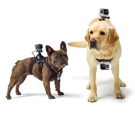 Фото 2 к товару Крепление GoPro Fetch Dog Harness (ADOGM-001)