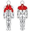 Блок для мышц спины TC-201 (верхняя тяга) BruStyle - фото 2
