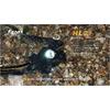 Фонарь налобный Fenix HL21 Cree XP-E LED R2 - фото 5