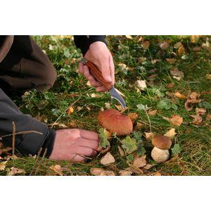 Нож складной Экспедиция грибной