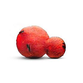 Фото 1 к товару Бойлы Starbaits Premium Peach Melba (14 мм, 2,5 кг) персик