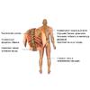 Обруч здоровья для похудения 1,3 кг - фото 4