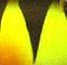 Воблер Jackson Komachi (4,5 см, 2,5 г) - Perch