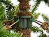 Ель TriumphTree Sherwood de Luxe 1,55 м зеленая - фото 4