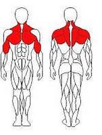 Фото 2 к товару Блок для мышц спины (верхняя тяга) Wuotan GB-01