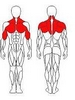Блок для мышц спины (верхняя тяга) Wuotan GB-01 - фото 2