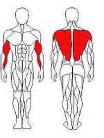 Фото 2 к товару Тяга для трапецивидных мышц Wuotan CB-20